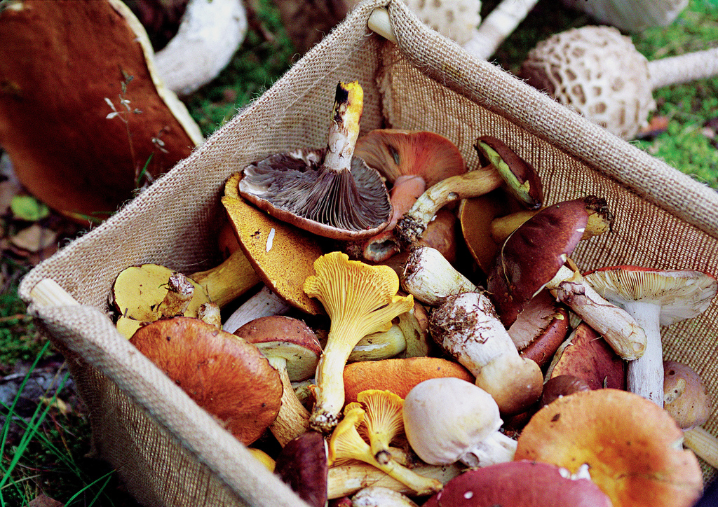 Immunity Boosting Mushrooms.